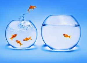 Goldfish jumping from small crowded bowl to larger less crowded one