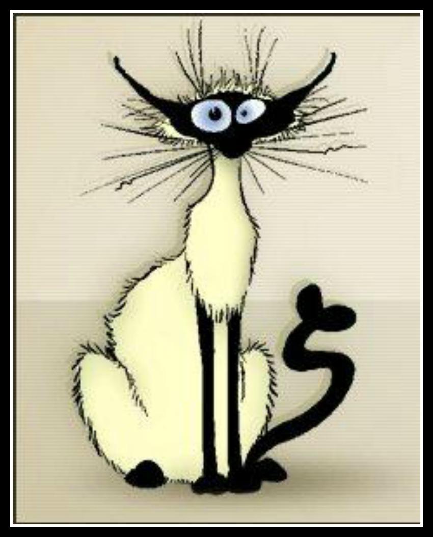 Frazzled looking cat