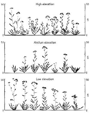 Achillea growth in different environments